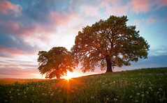 After the Rain has Fallen (lichtmaedel) Tags: trees sunset sun oak duo wiesen heath oaktrees mecklenburgvorpommern eiche eichen blendenstern