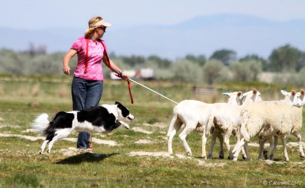 Dog Walking Opportunities