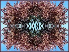 Baum (Dieter14 u.Anjalie157) Tags: rosa lila muster blten abendrot zusammenstellung stimmungen lieblingsfoto bastelstunde anjalie157 besondersherzlich kloopapier fotomssig