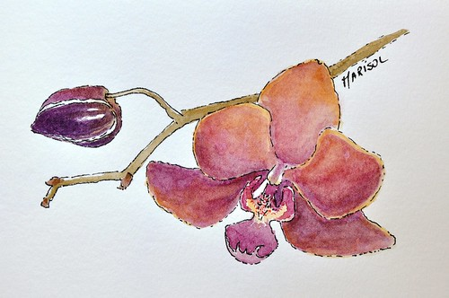 Orchids in watercolor