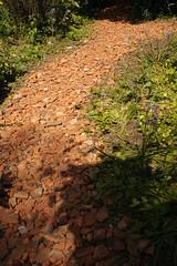 pannenpad (apalca) Tags: planten scherven rooftiles dakpannen