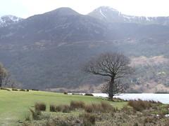 Lake District-Crummock Water (Harvey Smith) Tags: trees mountains water lakes lakedistrict cumbria northwestengland crumockwater