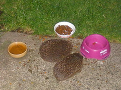 Our hedgehog friends
