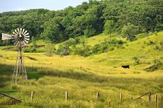 Iowa Pasture (cwwycoff1) Tags: farming iowa pasture