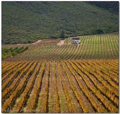 Kogmans Kloof Kottage (Panorama Paul) Tags: vineyard cottage ashton soe littlekaroo kogmanskloof nohdr sigmalenses mywinners nikfilters vertorama nikond300 wwwpaulbruinscoza paulbruinsphotography