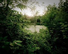Swamp south of Spring Valley near bike trail (Randy Durrum) Tags: bike spring little miami olympus trail valley swamp e510 durrum