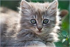 316. Wanna touch me? (Eyes of sky) Tags: california cat losangeles     superaplus aplusphoto 80200mmf28afs boc0610