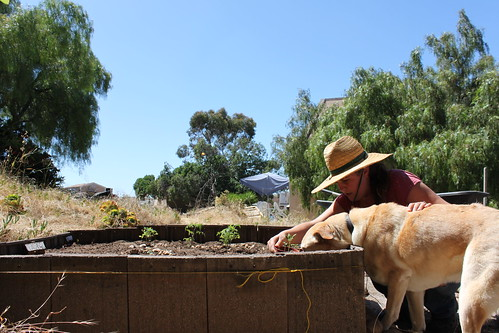 7 days: 1 - Gardener Dog