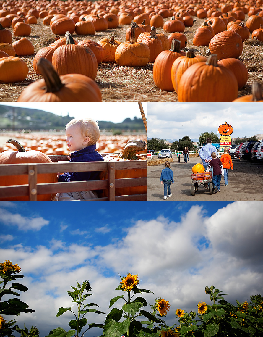 pumpkin patch2