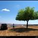 Under the Shade of a Ziziphus spina-christi Tree in Gogub, Salalah, Dhofar