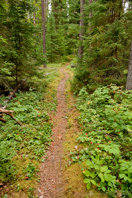 Clearwater Trail, White Lake Provincial Park, Ontario, 2010