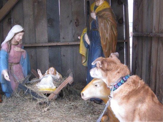 Una in the Manger