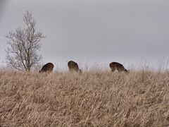 IMG_2404_fhdr (SCOUTER JOYCE) Tags: pictures ny newyork canon outdoors photography buffalo pics digitalphotography wny digitalphotograph eriecounty campcook shutterbugstrollcom westernnewyorkphotos buffaloevents canonsx10 wnyshutterbug scouterjoyce httpwwwflickrcomphotosscouterjoycesets lossonparkcheektowagadeerdoe