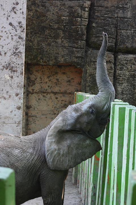 2010壽山動物園0013