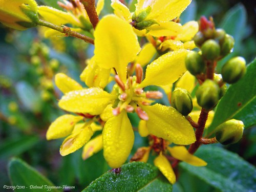 Jungle Flowers And Plants Flowers And Plants in The