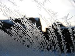 Fern Frost (Tetramesh) Tags: cold fern ice glass frost pattern belgium belgique belgie belgi flanders windowfrost belgien belgio blgica frostpattern gwladbelg vlaanderen oostvlaanderen meetjesland belgia blgica eastflanders belga belika fernfrost belgicko beija belgija belgjik belju blxica anbheilg waarschoot nucleation tetramesh b    frozenwaarschoot ubelgiji