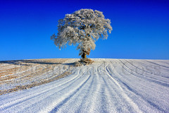 Winter at That Tree (Andy_Goss) Tags: trees ireland winter irish tree lone irishlandscapes treesdiestandingup gettyimagesirelandq1