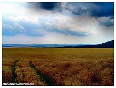Infinite fields / Végtelen rónák (FuNS0f7) Tags: summer hungary fields sonycybershotdscf828 hollókő yourwonderland