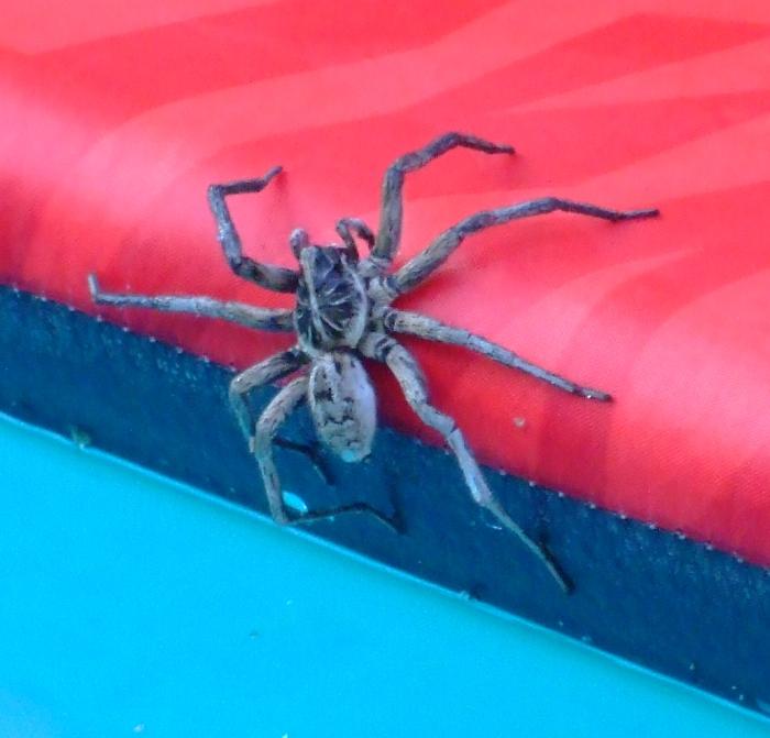 big spider 01