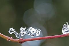 Ice Cristal (Roelie Wilms) Tags: winter ice ijs ijskristallen ijskristal icecristal weersomstandigheden icecristels