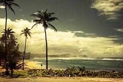 San Juan Beach (chapterthree) Tags: trees sky beach clouds walking puerto graffiti san juan vivid palm rico flasg
