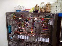 birdcage woody cage woodstock parrotlet pacificparrotlet americanyellow