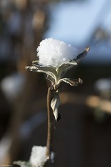 Last bits of snow, melting away