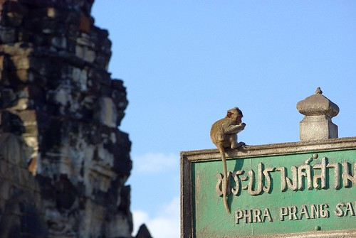Monkey on Sign