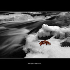 (Shobeir) Tags: longexposure winter blackandwhite bw usa snow ice nature horizontal river outdoors photography countryside interestingness stream day nopeople explore slowshutter upstatenewyork newyorkstate cascade circularpolarizer selectivecolor tranquilscene autumnleaf frozenstream ruralscene beautyinnature lonelyleaf newyorklandscape icystream shobeiransari newyorkwaterfall milkystream beechercreekfalls clarkvilleedinburg edingburgnewyork frozencascade gsubmitted northeastscenics upstatenewyorkscenics
