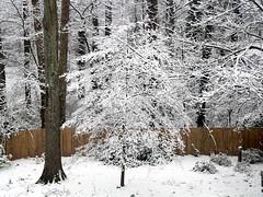 Snow in Decatur, Georgia