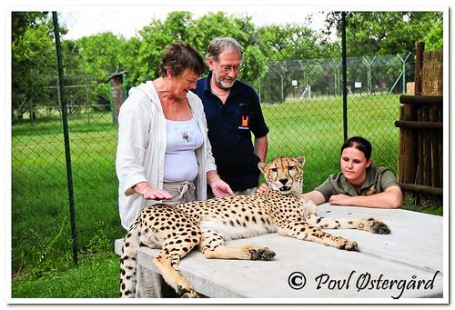 Kari og Povl med Gepard