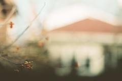 disparate (leslie*thomson) Tags: film 35mm berries kodak portra nikonfe 160nc