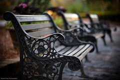 Just a day in the park... (Steve Gray) Tags: park wood winter brick green art home gardens canon bench al iron dof artistic bokeh seat alabama depthoffield cobblestones cobblestone 5d shallow bellingrath theodore wrought shallowdof bellingrathgardens 5dmkii