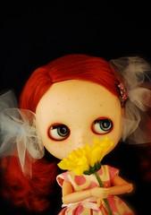 Poppy & daisy