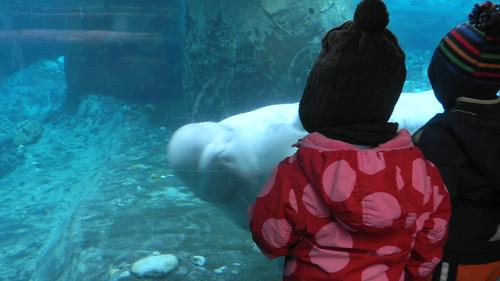 Hello Beluga