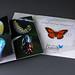 Key West Butterfly Invite