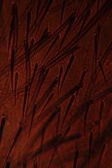 DSC_0577 (John Aho) Tags: microscopy hiddenworld nikond90 lietzmicroscope