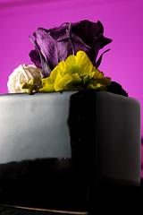 Glatine Rosco Rose maboutiquephoto.fr (olivier.buhler) Tags: test photo flash rosco gel gelatine filtre clairage filtres glatine maboutiquephotofr