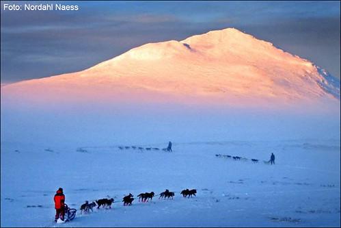 Finnmarkslopet: Gewinnerfoto