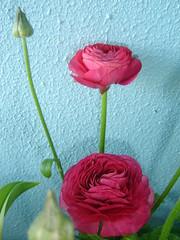 Flores no nosso terraço