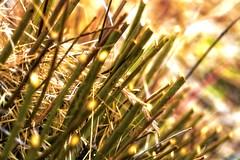 Glaring grass (Thomaniac) Tags: wood light plant abstract green grass closeup licht flora glow glare natur pflanze filter plugin gras grün process holz effect nahaufnahme leuchten glühen efs60mmmacro canoneos450d thomaniac