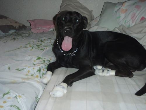 Bandaged feet ;-(