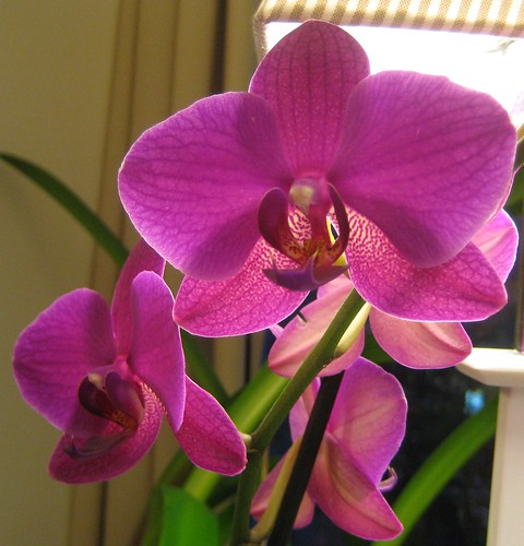 2010 orchids by Anna Amnell