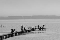 fishing (cuckove) Tags: dojran lake macedonia cuckove canon bw lakescape fishing fisherman македонија дојран езеро λίμνη δοϊράνη λίμνηδοϊράνη landscape ezero dojranskoezero dojransko dojranlake balkan canon1000d emilchuchkov emilchuchkovphotography