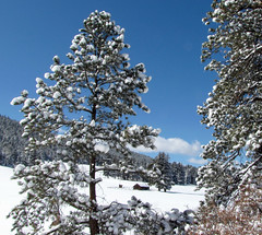 Colorado's First Day of Spring! (Sandra Leidholdt) Tags: ranch trees usa snow mountains america landscape us colorado unitedstates explore american rockymountains paysage freshsnow amricain firstdayofspring explored sandraleidholdt 1stdayofspring leidholdt southturkeycreek