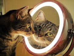 Handsome (Swanky Feline) Tags: cat mirror feline kitty tony tr impressedbeauty
