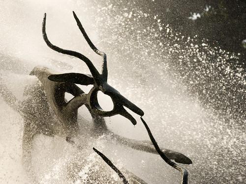 Prancing Antelope