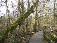 Plantbrook Nature Reserve