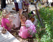 backyard on fairy day