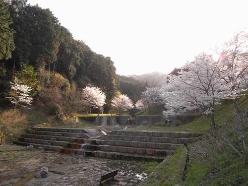<桜>当麻寺奥の公園-02